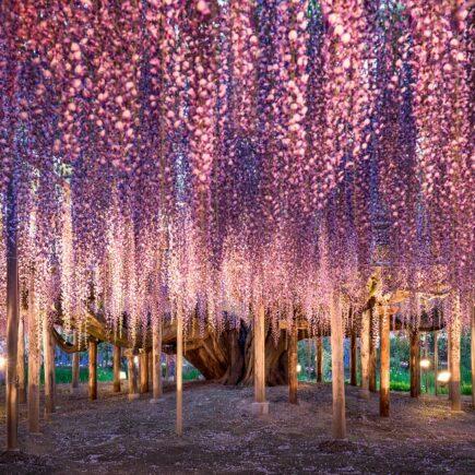 Giappone: cosa vedere. L'albero della vita di Avatar.